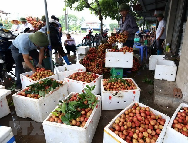 Hai Duong vise a recolter 40.000 tonnes de litchis en 2019 hinh anh 1