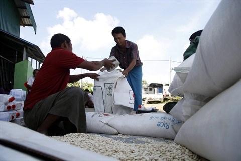 Le Myanmar va exporter 500 millions de dollars de riz en Chine hinh anh 1