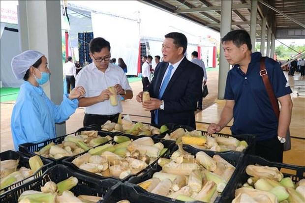 Mise en service du plus grand centre de transformation de fruits et legumes au Vietnam hinh anh 2