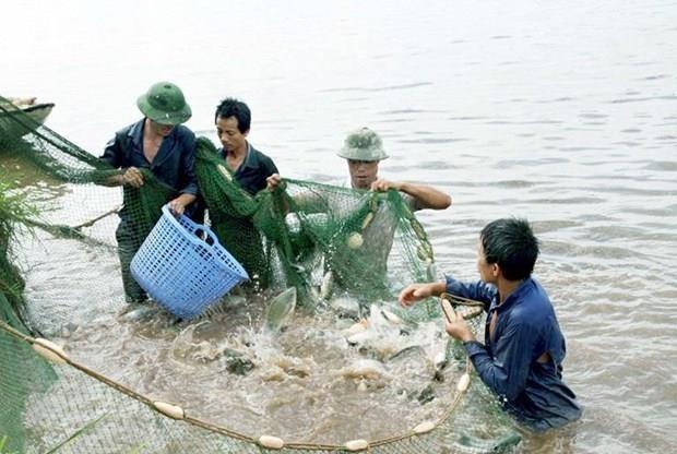 Vinh Phuc: la production de l'aquaculture et de la peche en hausse de pres de 5% hinh anh 1