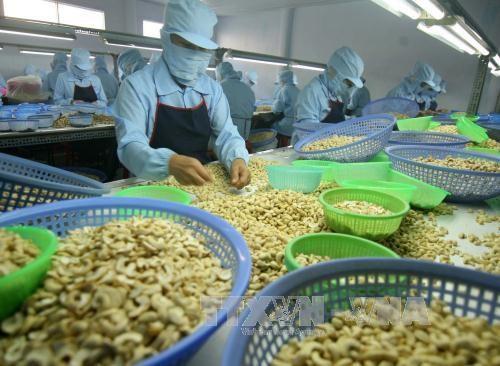 Le Vietnam vise 4 milliards de dollars d'exportation de noix de cajou en 2020 hinh anh 1