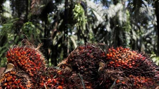 L'Inde reduit ses droits de douane sur l'huile de palme raffinee en provenance de l'ASEAN hinh anh 1