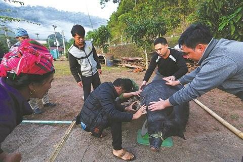 Le Tet traditionnel des Ha Nhi a Dien Bien hinh anh 1