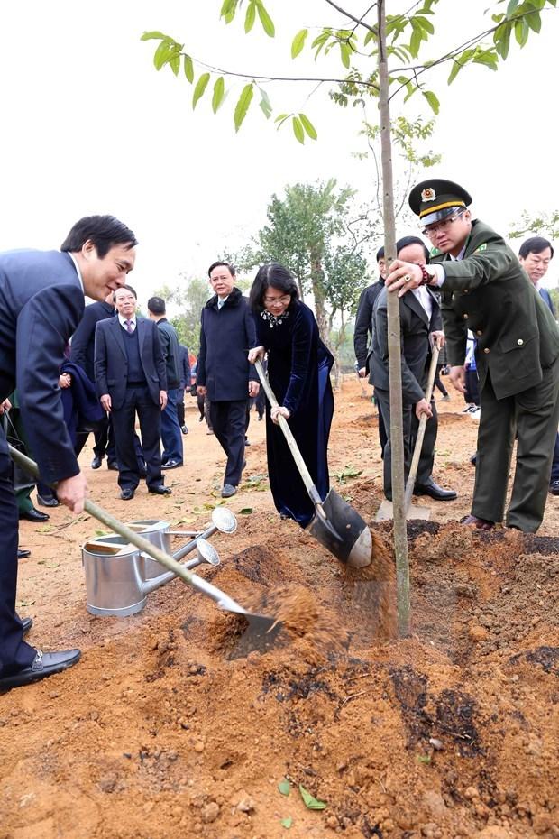 Lancement de la Fete de plantation d'arbres aux temples des rois Hung a Phu Tho hinh anh 2