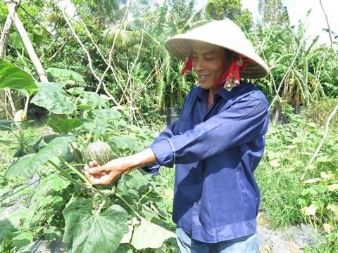 Ho Chi Minh-Ville compte 40 nouvelles entreprises agricoles hinh anh 1
