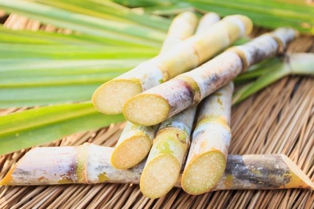Thailande : la secheresse reduira fortement sa production de sucre hinh anh 1