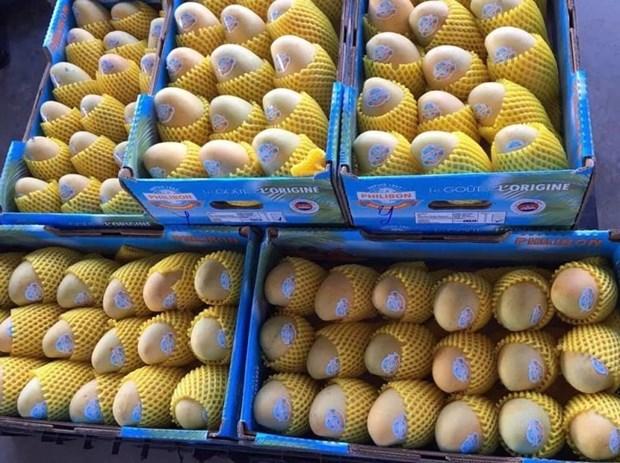 Le Cambodge pourrait exporter environ 500.000 tonnes de mangues par an vers la Chine hinh anh 1