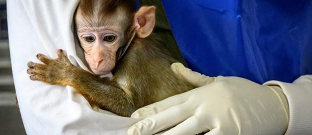 Coronavirus: le point sur la pandemie en Asie du Sud-Est hinh anh 1