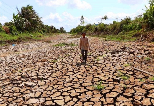 Delta du Mekong : la salinisation a tendance a diminuer mais restera elevee hinh anh 2