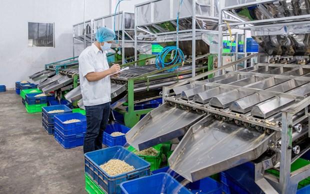 La filiere de la noix de cajou abaisse sa valeur d'exportations a 3,2 milliards de dollars hinh anh 1