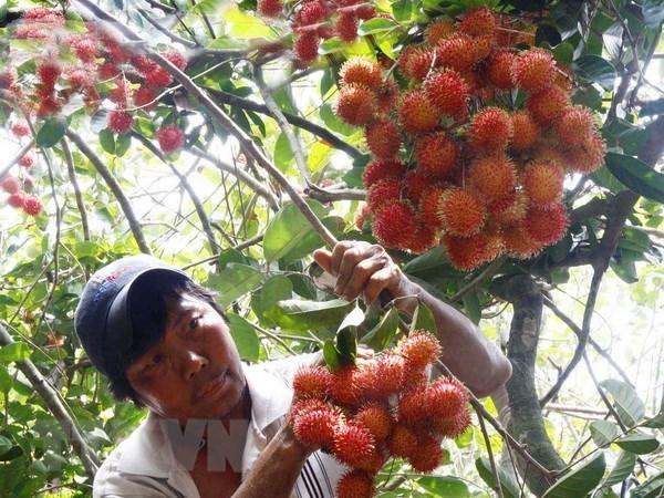 Les experts americains de la quarantaine vegetale arriveront au Vietnam le 2 septembre hinh anh 1