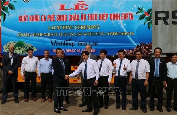 EVFTA : le Vietnam exporte ses premiers lots de cafe vers l'UE hinh anh 1