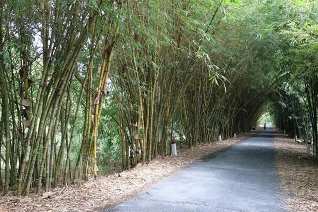 Dong Thap developpe la biodiversite dans l'agriculture hinh anh 1