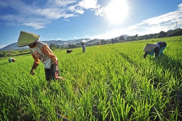 L'Indonesie cherche a ameliorer l'irrigation rizicole hinh anh 1