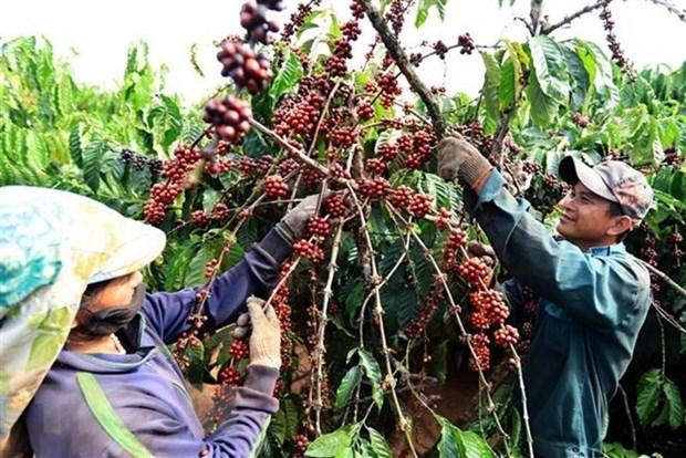 L'Afrique du Sud reste le principal partenaire commercial du Vietnam en Afrique hinh anh 1