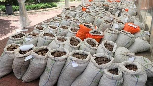 Singapour saisit pres de 13 tonnes d'ecailles de pangolin hinh anh 1