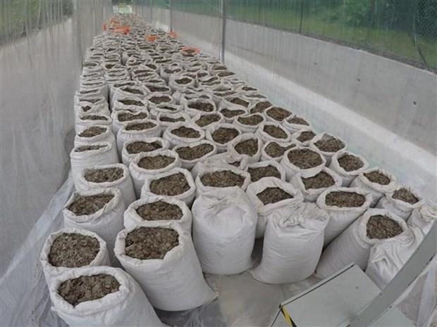 Singapour saisit une grande quantite d'ecailles de pangolin hinh anh 1