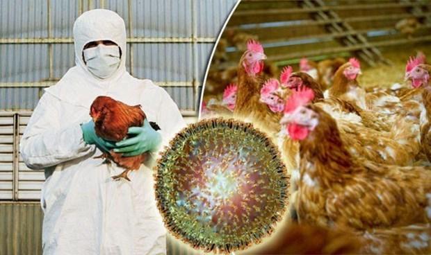 Le Cambodge signale le premier foyer de grippe aviaire H5N6 hinh anh 1