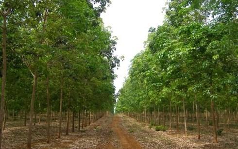 Le Laos attire le plus d'investissement du Vietnam hinh anh 1