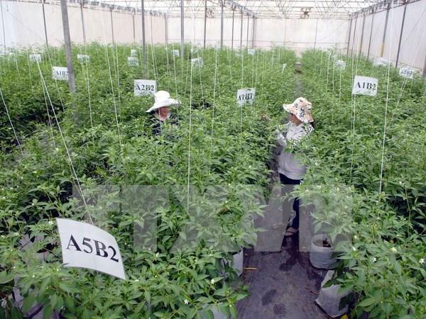 La restructuration agricole connait des changements positifs hinh anh 1
