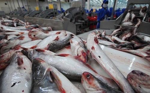 Forte hausse des exportations de pangasius vers la Chine hinh anh 1