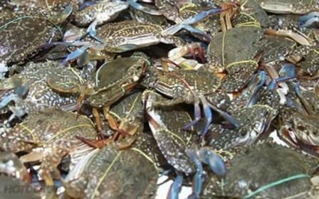 Le Japon, 3e debouche pour les crabes et crustaces vietnamiens hinh anh 1