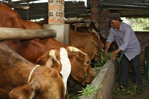 Dak Lak : la nouvelle vitalite des ethnies minoritaires hinh anh 1