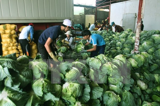 Les produits agricoles vietnamiens seduisent les entreprises chinoises hinh anh 1