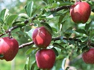 Signature d'un accord d'exportation de pommes polonaises vers le Vietnam hinh anh 1