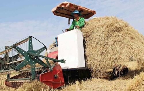 Une ferme etatique va exporter les pailles au Japon hinh anh 2