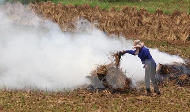 Une ferme etatique va exporter les pailles au Japon hinh anh 1