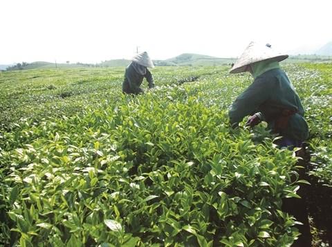 La FAO continue de soutenir la lutte contre la pauvrete du Vietnam hinh anh 2