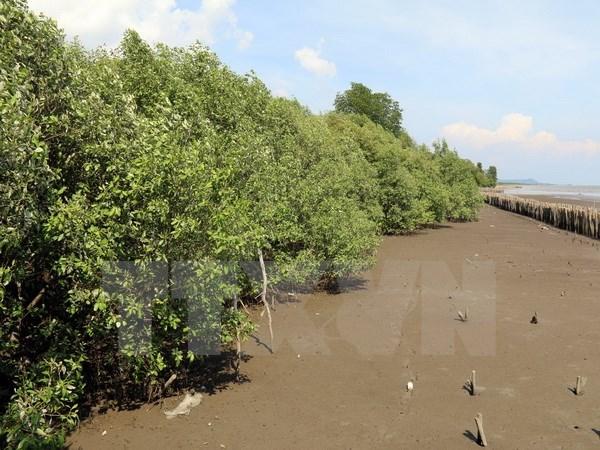 Aide japonaise pour la plantation de mangroves hinh anh 1
