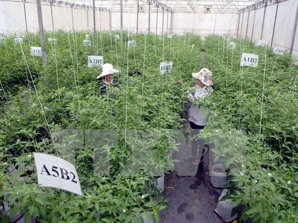 Agriculture : application des technologies pour ameliorer la vie des paysans hinh anh 1