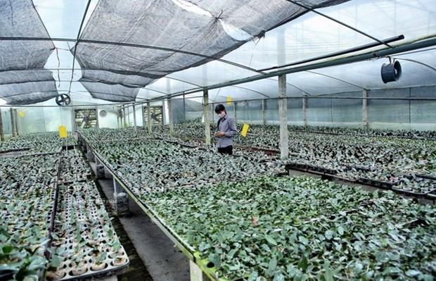 Une region de culture d'orchidees de hautes technologies hinh anh 2