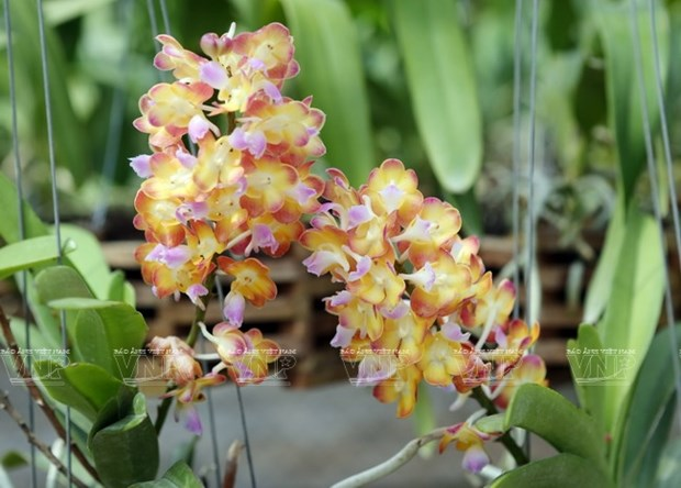 Une region de culture d'orchidees de hautes technologies hinh anh 3
