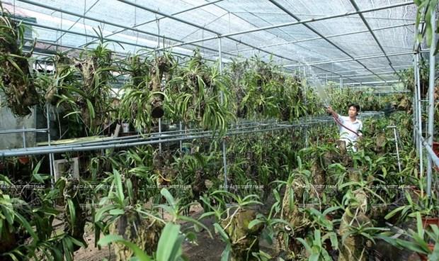 Une region de culture d'orchidees de hautes technologies hinh anh 1