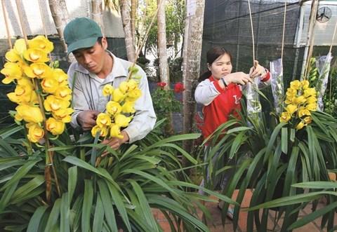 Floralies de Da Lat 2015 : un festival de plantes hinh anh 1