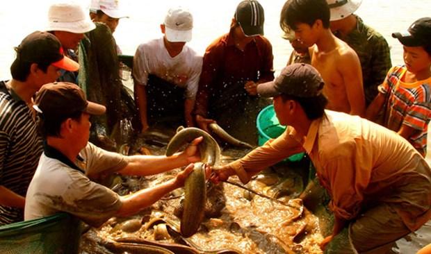 De nombreux produits vietnamiens rejoignent la chaine d'approvisionnement mondiale hinh anh 1