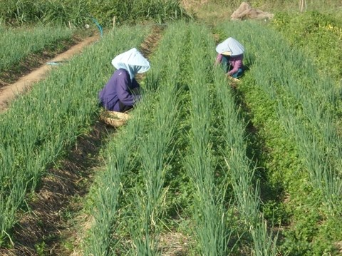 Les cooperatives contribuent a la valorisation des produits agricoles hinh anh 1