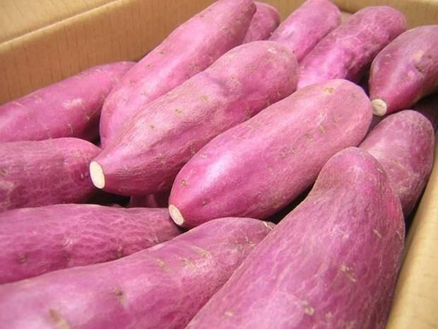 Singapour : les patates douces cultivees au Vietnam sont sures hinh anh 1