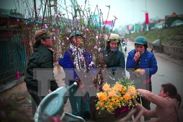 Les fleurs de pechers du Nouvel An vietnamien hinh anh 1