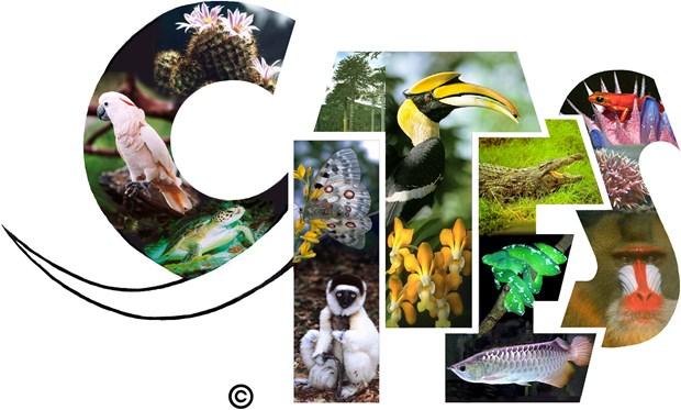 Le Vietnam organisera la 3e conference sur le trafic d'especes sauvages hinh anh 1