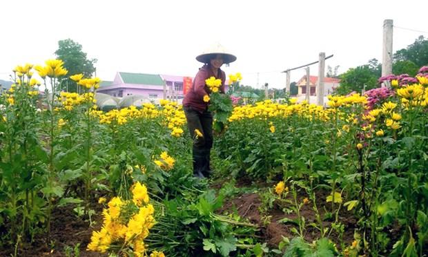 Nouvelle ruralite: Quang Ninh sur la ligne d'arrivee hinh anh 1