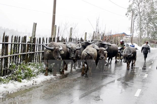 Le gouvernement dirige la prevention et la lutte contre le froid hinh anh 1