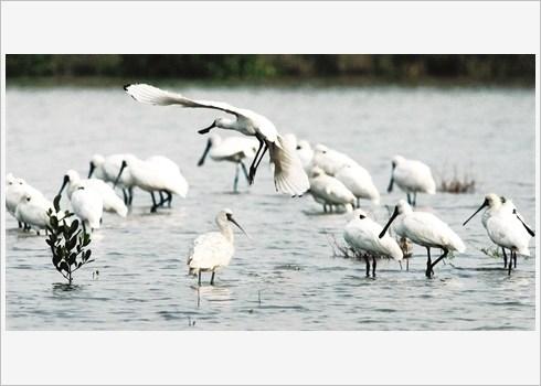 Voyager autrement au Parc national de Xuan Thuy hinh anh 2