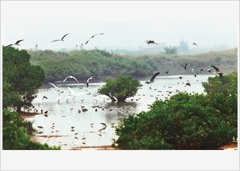 Voyager autrement au Parc national de Xuan Thuy hinh anh 1