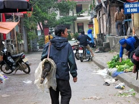 Le cochon qui se porte sous le bras, specialite du Tay Bac hinh anh 1