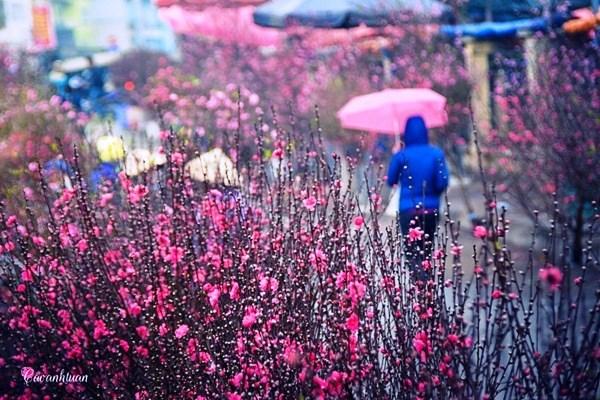 Les marches des fleurs, element culturel du Tet hinh anh 1