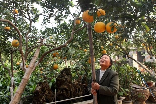 Quatre villages de metiers de Hanoi a visiter au Tet du Singe hinh anh 3